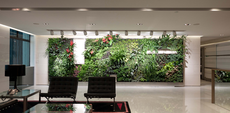 6 Hidden Benefits Of Plants In The Office Natura Enhancing The