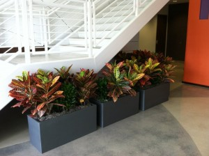 Live plants help non-profit meet ADA standards.