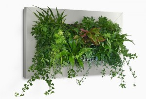 benefits of a green living wall