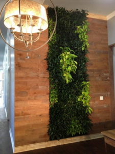 benefits of green living walls