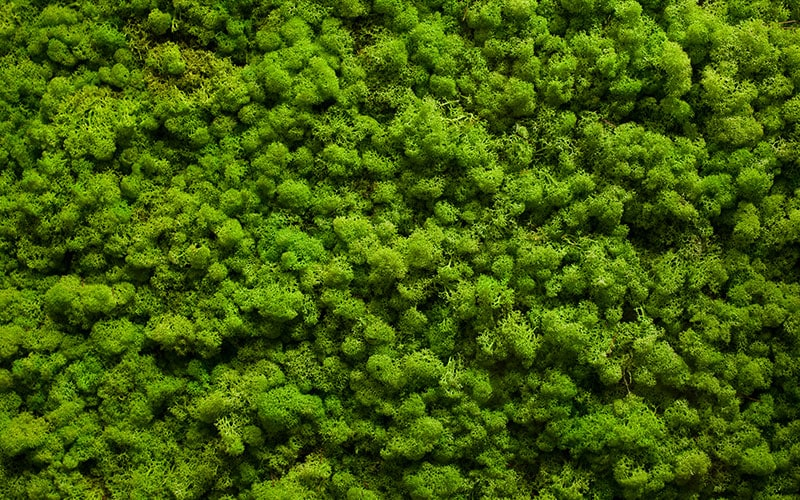 Moss Wall   Natura | Enhancing The Built Environment   Indoor Office  Plants, Outdoor Landscapes, Green Wall Systems U0026 Holiday Decor