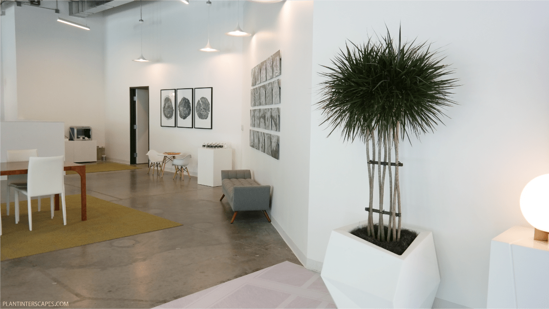 WALSH Ft. Worth Office Plants