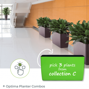 Optima One Planter Combos