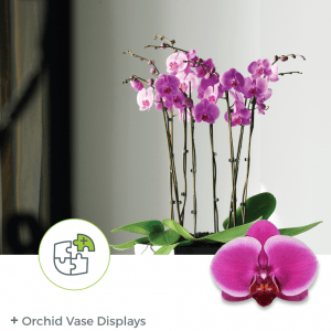 Orchid Vase Displays