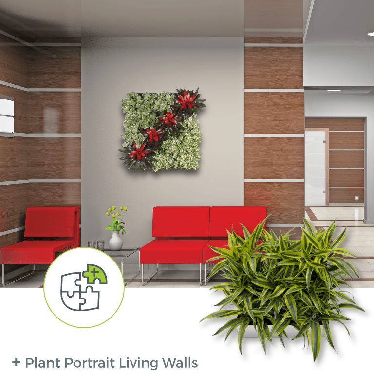 Plant Portrait Living Walls