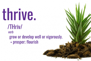 Thrive in your Career with Natura