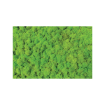 Light Green Reindeer Moss