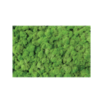 Medium Green Reindeer Moss