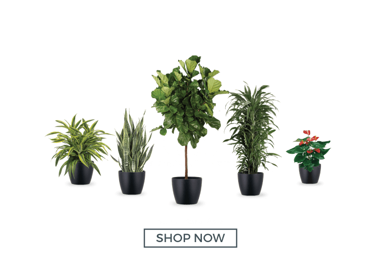 Shop Office Plant Packages