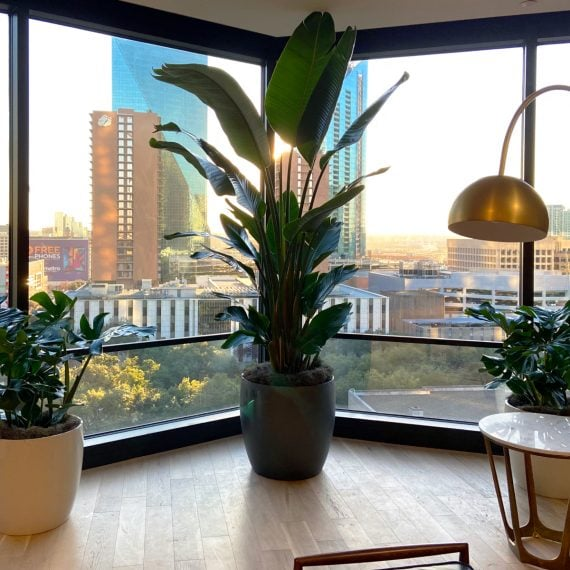 Common Desk Indoor Plant Design Dallas