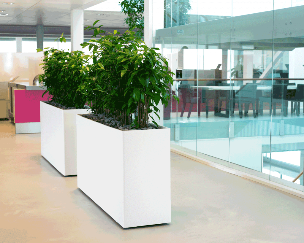 Social Distance with Live Plants