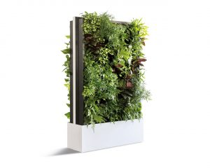 Office Dividers with Live Plants