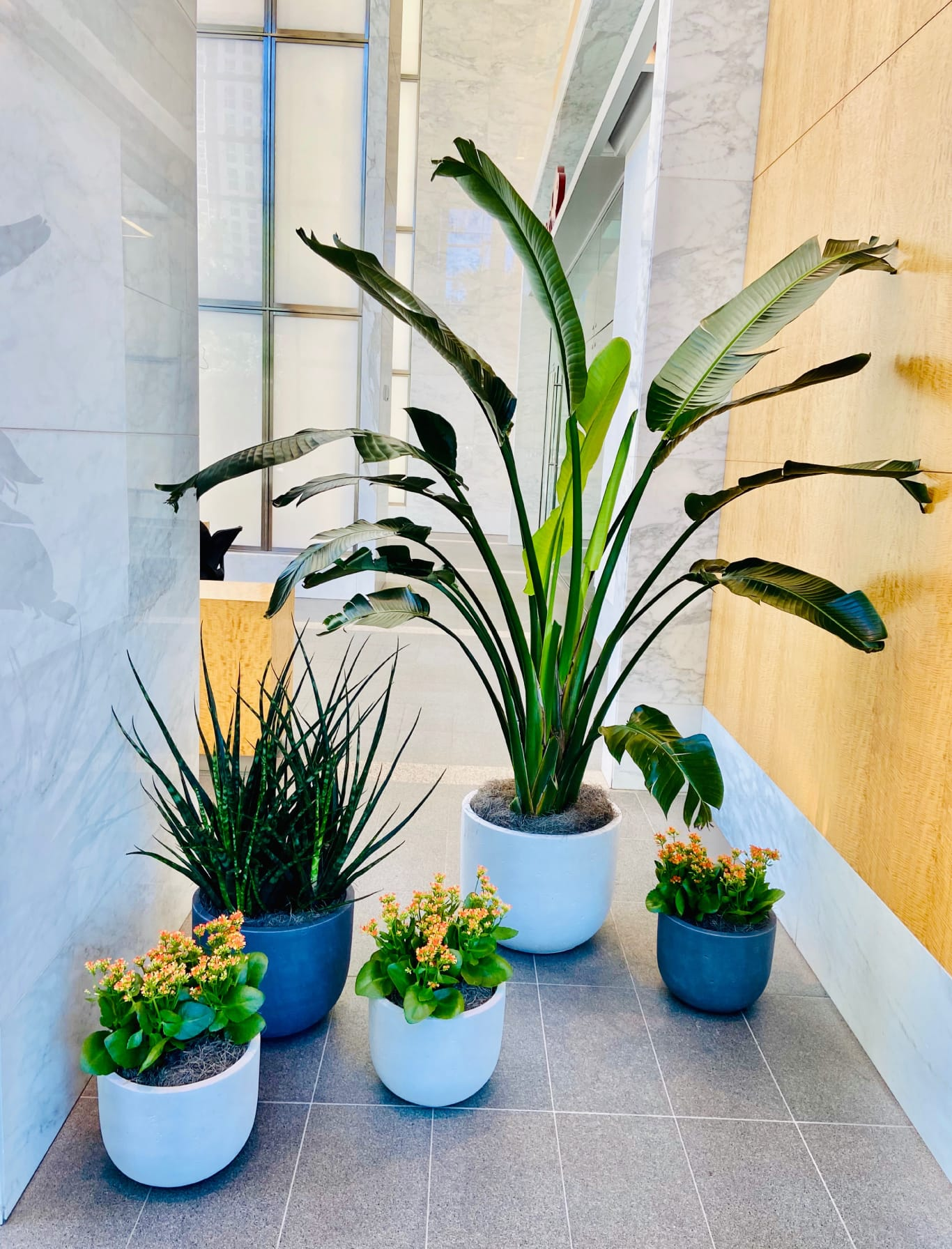 Dallas Office Plant Design - NaturaHQ