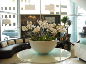 interior plant service - benefits of live plants